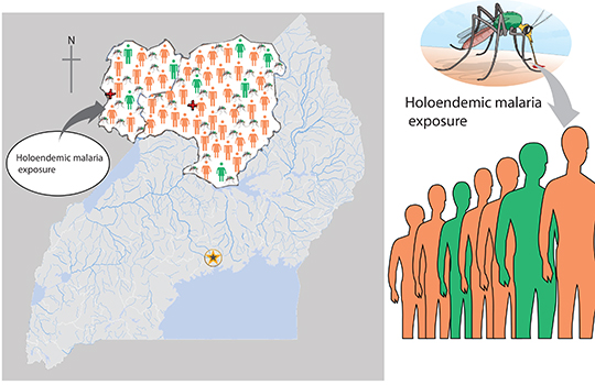 Map showing holoendemic malaria exposure accompanied with a picture of a mosquite targeting people.